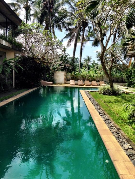 Indigo Tree pool