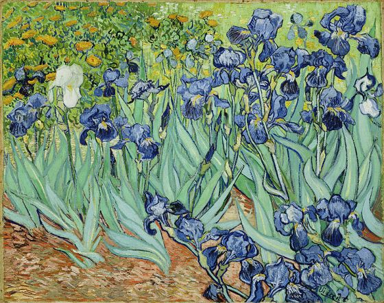 The Irises - Vincent Van Gogh [Photograph courtesy Wikipedia]